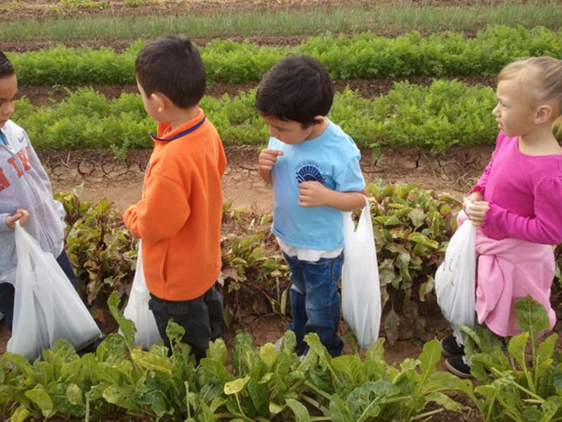 Preschoolers exploring and learningon a farm in Buckeye Arizona